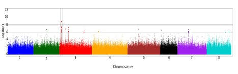 High-density genome-wide association mapping implicates an F-box encoding gene in Medicago truncatula resistance to Aphanomyces euteiches -  2013 - New Phytologist - | Nature : beauty, beasts and curiosities... | Scoop.it