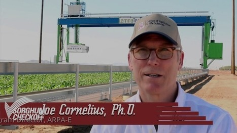 Sorghum Notes | July 7, 2016 | CALS in the News | Scoop.it