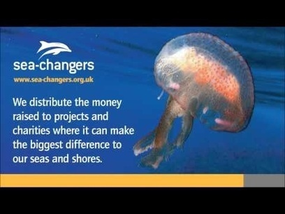 #SeaChangers  #uk   Rescue our Ocean's & it's species from Man's Pollution!   Scoop.it
