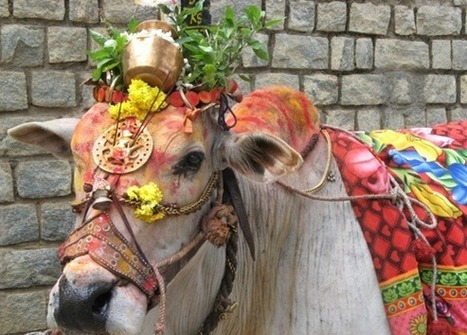 Pongal Festival 2015 | Pongal Festival in India | Holiday India | Holiday India | Scoop.it