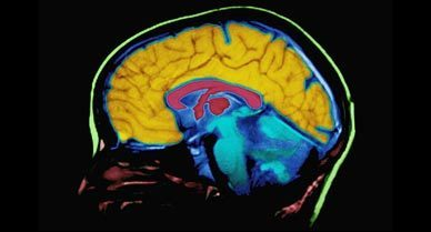 Top Ten Myths About the Brain | Cognitive Science | Scoop.it
