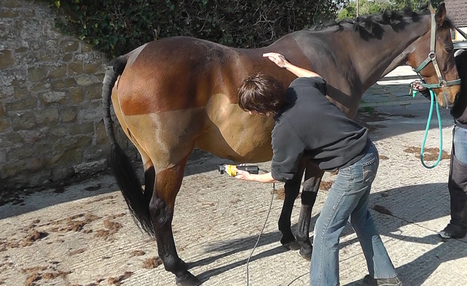 How to Clip Your Horse Video | Utterly horses | Scoop.it