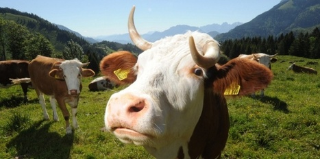 Adieu les deux Savoies, bonjour la Savoie Mont-Blanc ? | Savoie | Scoop.it