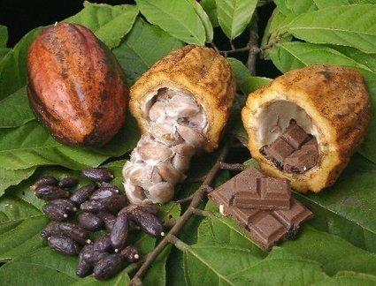 Procès des ex-dirigeants de la filière café-cacao: La défense détruit ...   FILIERE CAFE CACAO EN COTE D'IVOIRE   Scoop.it