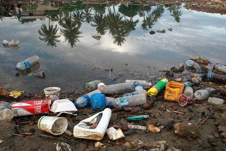 UN News - Biodegradable plastics are not the answer to reducing marine litter, says UN | Global Recycling Movement | Scoop.it