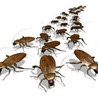 Boca Raton We Kill Pest Control