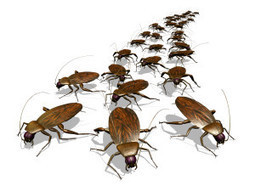 Boca Raton We Kill Pest Control - highly professional exterminating service. | Boca Raton We Kill Pest Control | Scoop.it