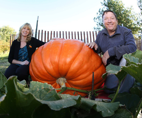 Weather a gourdian knot for frustrated growers at Circleville Pumpkin Show - Columbus Dispatch | Phytophthora | Scoop.it