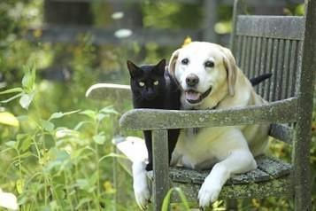 Cani e gatti allungano la vita: i risultati di una ricerca | Chic4Dog | Dog Style | Scoop.it
