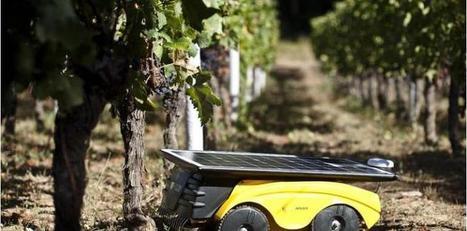 Un robot tondeur écolo débarque dans le vignoble ... - La Tribune.fr | Des robots et des drones | Scoop.it