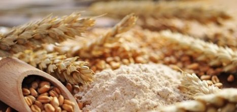 Les agriculteurs forcés de verser des droits d'auteurs aux semenciers | Questions de développement ... | Scoop.it