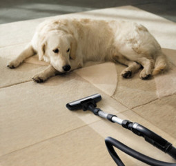 How To Remove the Smell of Dog Urine From Your Carpets   AmeriClean Carpet Cleaning   Scoop.it