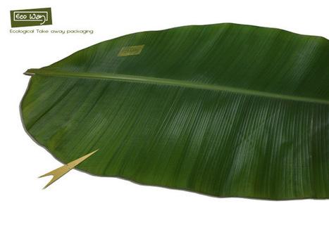 Eco Way - L'emballage naturel à emporter | L'emballage écologique | Développement durable & Environnement | Scoop.it