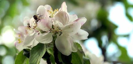 Bumblebees Have A New Job: Delivering Organic Pesticides | Miel Melipona | Scoop.it