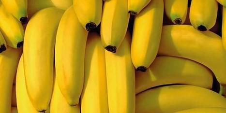 L'Association interprofessionnelle de la banane reconnue en tant qu'interprofession agricole | Arboriculture: quoi de neuf? | Scoop.it
