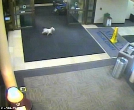 Dog Cissy runs away from home, turns up at hospital to find sick owner | This Gives Me Hope | Scoop.it