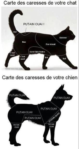 les Cartes des Caresses des Chiens et des Chats | CaniCatNews-actualité | Scoop.it