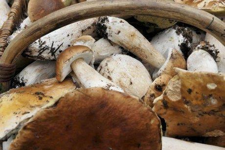 Ils ont (presque) percé les mystères du cèpe | Agriculture en Dordogne | Scoop.it