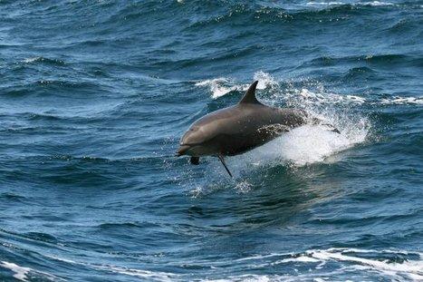 US authorities investigate dolphin shooting | Biodiversity protection | Scoop.it