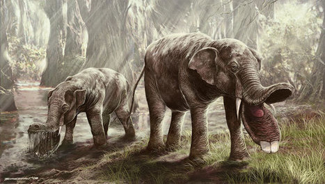 Absurd Creature of the Week: This Prehistoric Elephant Had a Huge Spork for a Mouth - Wired Science | Paleontology News | Scoop.it