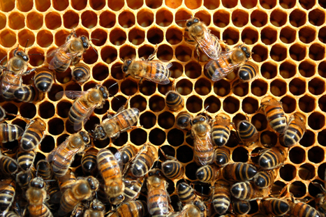 Waggl, Inspired by Honeybees to Help People Make Decisions, Secures $1M | Biomimicry | Scoop.it