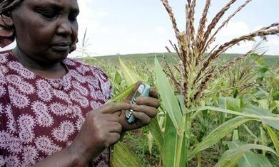 How ICT tools are improving efficiency of agricultural development | e-skills | Scoop.it