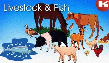 Learn The Accurate Growth of Livestock and Fish In India   Manufacturers Directory in India   Scoop.it