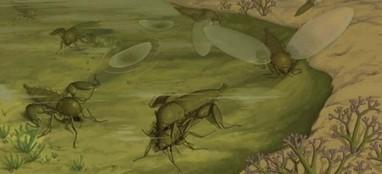 Des insectes fossiles lèvent le voile sur une énigme paléontologique (suite)   EntomoNews   Scoop.it