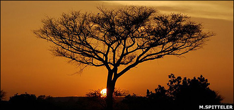 BBC NEWS   Science & Environment   Trees: More than just carbon sinks   A2 G4 Sustainability   Scoop.it