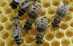 Néonicotinoïdes: un moratoire sans effet sur les ventes - Journal de l'environnement | Planete DDurable | Scoop.it