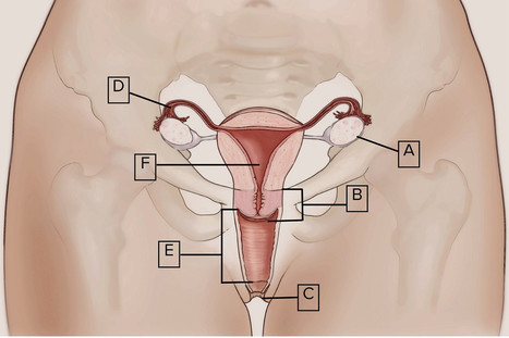 Nearly half of British women cannot identify the vagina | Psychology and Health | Scoop.it