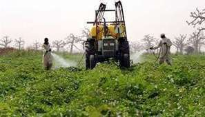 Afrique : plus de trois millions d'hectares de surfaces OGM | Abeilles, intoxications et informations | Scoop.it