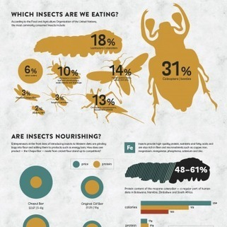 Infographic: Can Insects Feed A Hungry Planet? | green infographics | Scoop.it