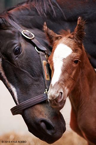 Zenyatta's Second Foal Born April 1 | The Jurga Report: Horse Health, Welfare, and Care | Scoop.it