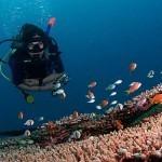 Exploring underwater meditation | ScubaObsessed | Scoop.it