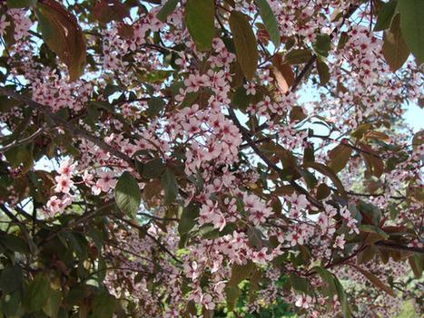 Haie champêtre : esthétique et biodiversité | Confidences Canopéennes | Scoop.it