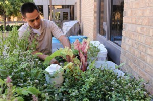 The VV Living Lab is much more than a garden | Tejano Tribune | Aquaponics World View | Scoop.it