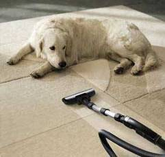Upholstery Cleaning | Fast Carpet Cleaners | Scoop.it