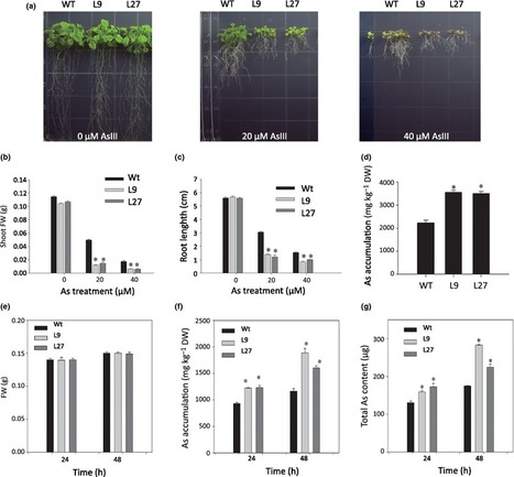 An aquaporin PvTIP4;1 from Pteris vittata may mediate arsenite uptake - New Phytologist - | Plant nutrition & stress | Scoop.it