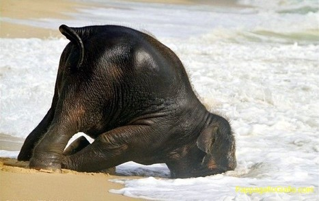 Elefante scappa dal caldo (7 foto) - PappagalloGiallo.com   ANIMALI   Scoop.it