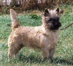 Ejercicios para trabajar la llamada en el perro : TiendAnimal   Perros   Scoop.it