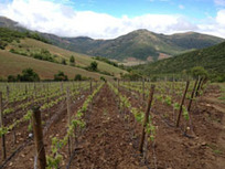 Wine Peeps: A Wine Blog » Wines of Chile: An Overview | Chilean Spanish | Scoop.it