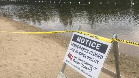 Algae bloom forces closure of Lake Temescal in Oakland - abc7news.com | cyanobacteria | Scoop.it
