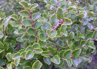 Common plant names for Māori Language Week   Te Papa (Blog)   Kiosque du monde : Océanie   Scoop.it