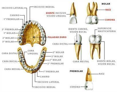 Las emociones y los trastornos dentales | Diseño y Emociones | Scoop.it