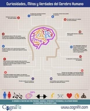Curiosidades sobre el cerebro (infografía) - Blog de Fisioterapia   La WEB 2.0 y la medicina.   Scoop.it