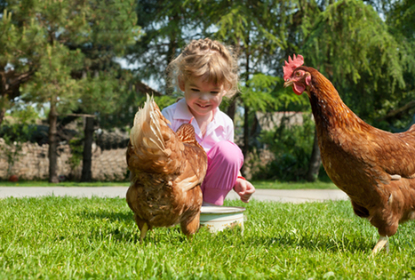 Who's Smarter, The Chicken Or The Toddler? | Nature Animals humankind | Scoop.it