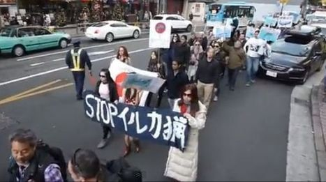 Younger generations of Japanese are speaking out against whaling (Includes interview) | Compassion in Action | Scoop.it