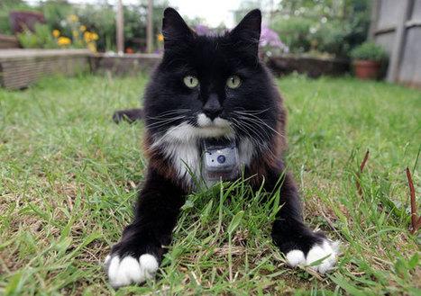 [video] Este es el reality exclusivo para gatos - Radio Uno | Documentary | Scoop.it