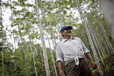 Smallholder profits, policies collide in Peruvian Amazon | Peruvian Amazon | Scoop.it